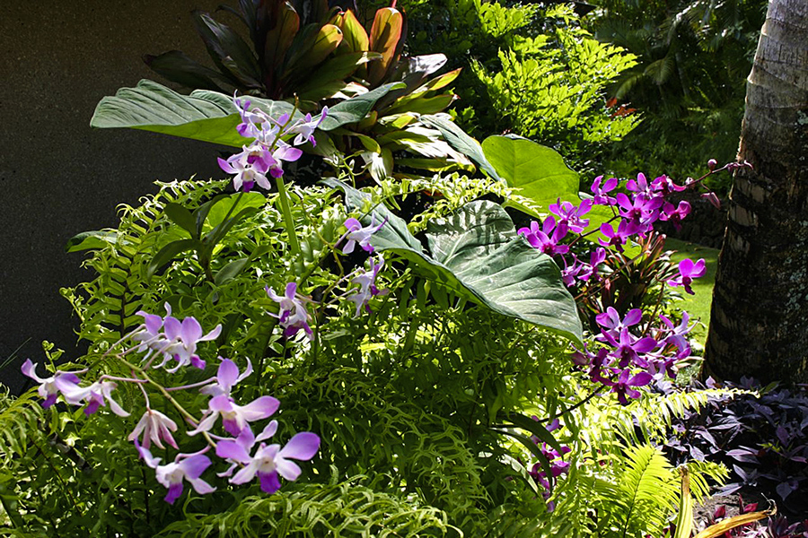 p_75-Princeville-Vacations.KoholaPoint.orchids