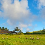 p_78-Princeville-Vacations.halenene.front.nene.gaggle
