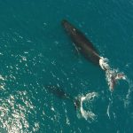 Princeville-Vacations Watch Whales from your Unit-3300x2254-300dpi