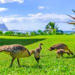Princeville-vacations Pali Ke Kua 105 Nene family